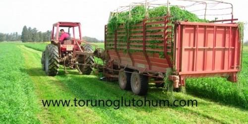 İtalyan Çimi Tohum Fiyatları
